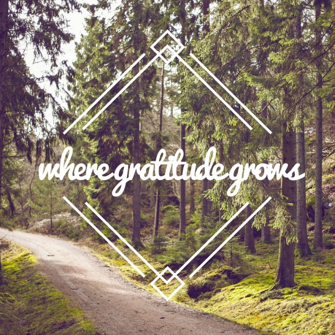 where gratitude grows.jpg